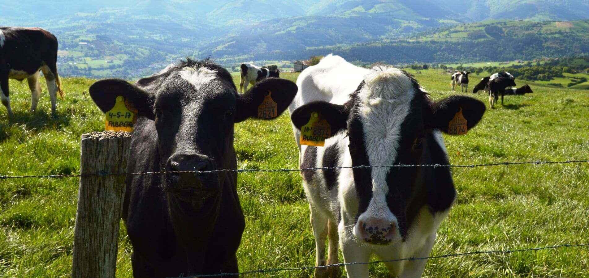 Comprométete con el turismo sostenible en Euskadi
