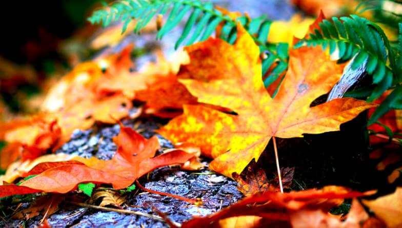 planes de ocio en otoño