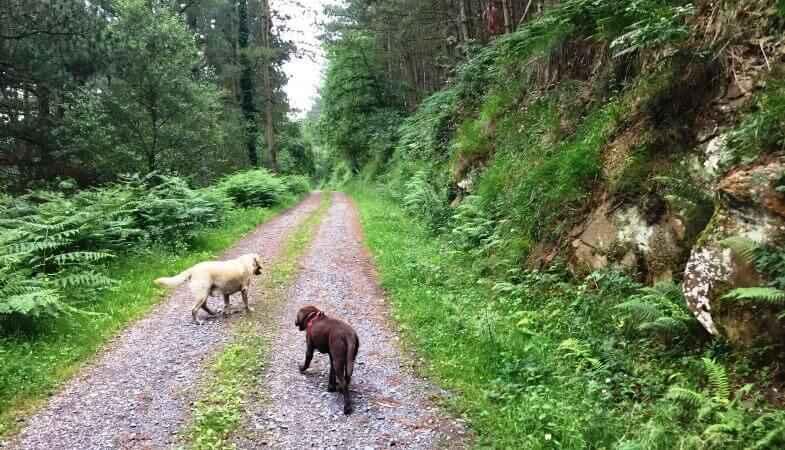 Día de perros por el monte Balgerri